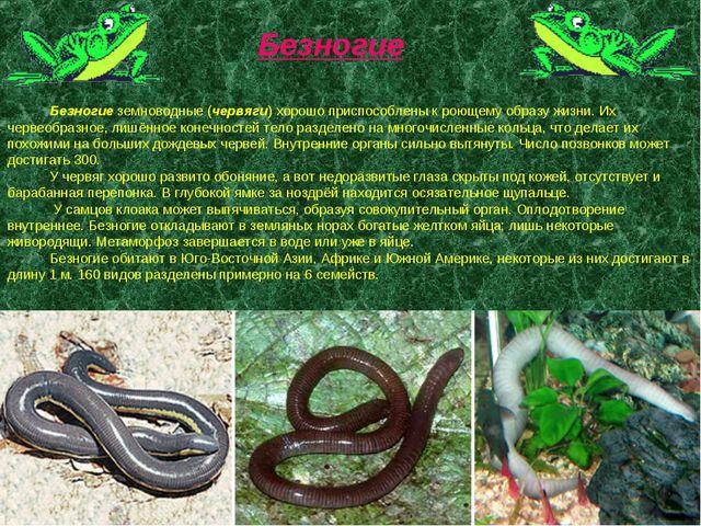Безногие земноводные (червяги) хорошо приспособлены к роющему образу жизни....