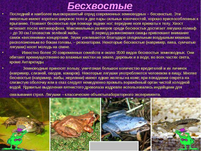 Бесхвостые Последний и наиболее высокоразвитый отряд современных земноводных...