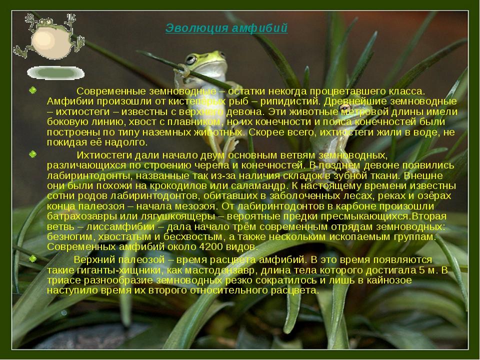 Современные земноводные – остатки некогда процветавшего класса. Амфибии прои...