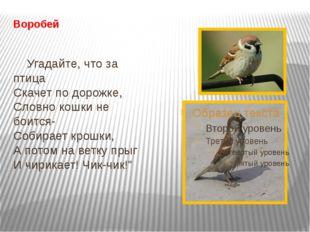 Воробей Угадайте, что за птица Скачет по дорожке, Словно кошки не боится- Соб