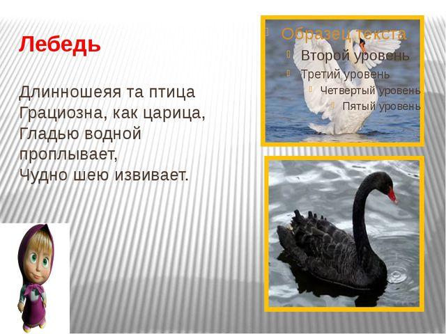 Лебедь Длинношеяя та птица Грациозна, как царица, Гладью водной проплывает,...