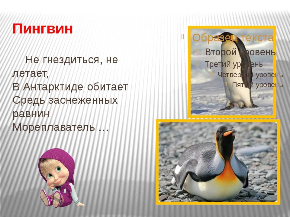 Пингвин Не гнездиться, не летает, В Антарктиде обитает Средь заснеженных равн...