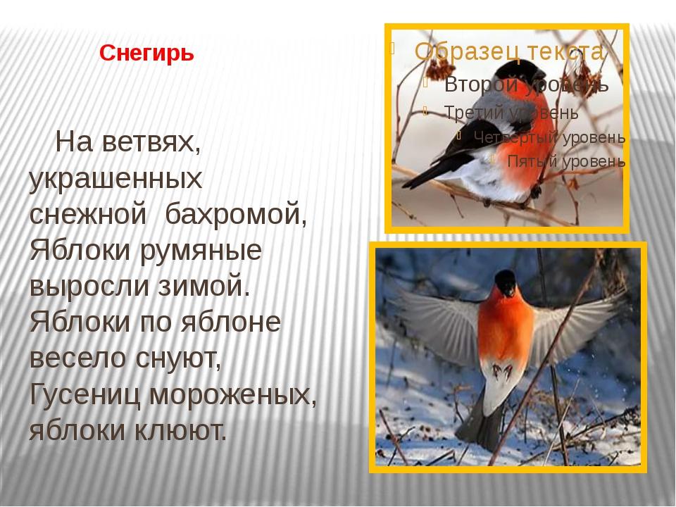 Снегирь На ветвях, украшенных снежной бахромой, Яблоки румяные выросли зимо...