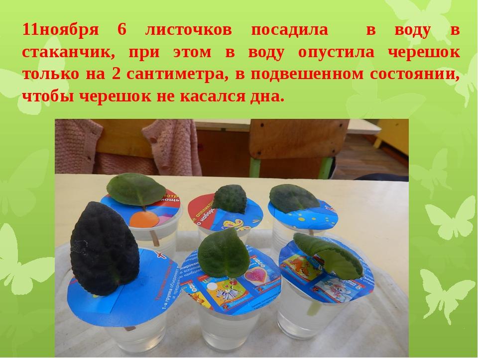 11ноября 6 листочков посадила в воду в стаканчик, при этом в воду опустила че...