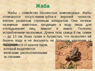 Жаба Жабы – семейство бесхвостых земноводных. Жабы отличаются отсутствиемзу