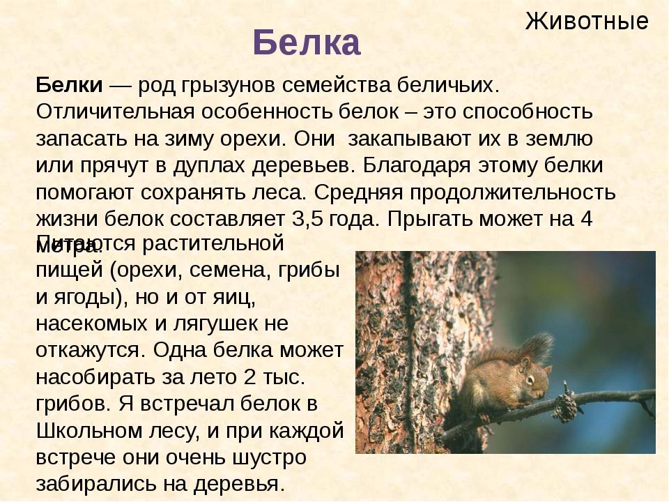 Животные Белка Белки— род грызунов семействабеличьих. Отличительная особенн...