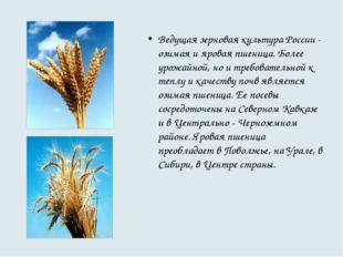 Ведущая зерновая культура России - озимая и яровая пшеница. Более урожайной,