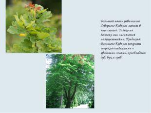 Большая часть равнинного Северного Кавказа лежит в зоне степей. Только на вос