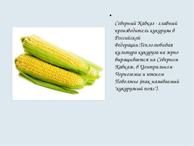 Северный Кавказ - главный производитель кукурузы в Российской Федерации.Тепл...