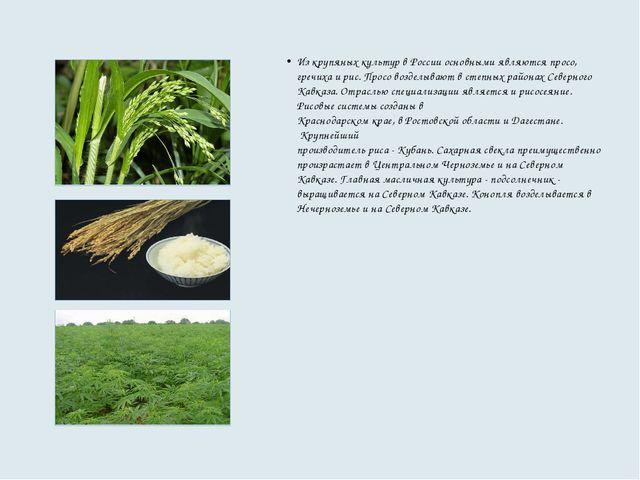 Из крупяных культур в России основными являются просо, гречиха и рис. Просо в...