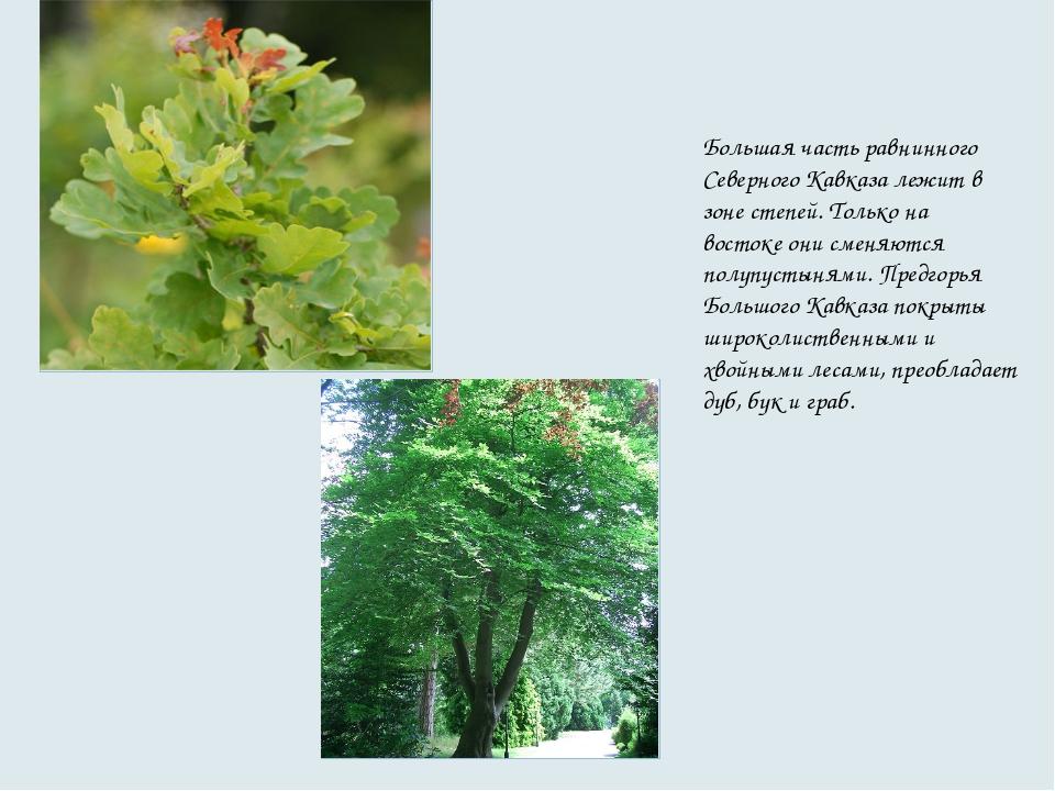 Большая часть равнинного Северного Кавказа лежит в зоне степей. Только на вос...
