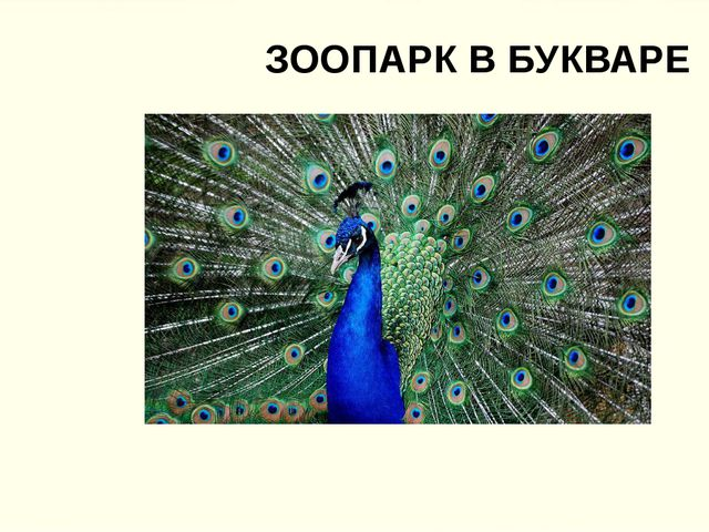 ЗООПАРК В БУКВАРЕ
