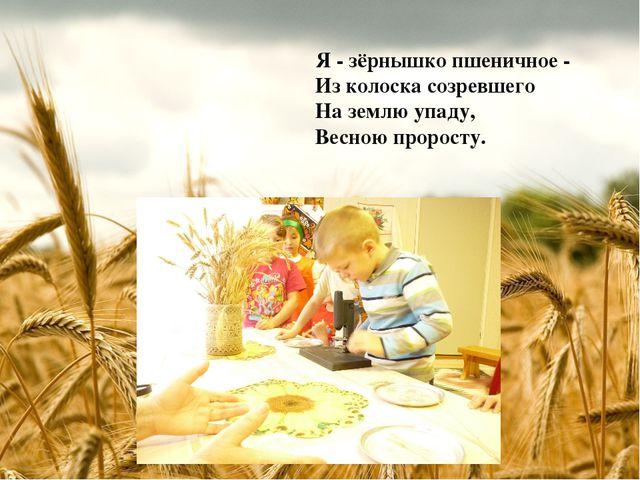 Я - зёрнышко пшеничное - Из колоска созревшего На землю упаду, Весною проросту.