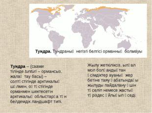 Тундра.Тундраның негізгі белгісі орманның болмауы Тундра– (саами тіліндеtu
