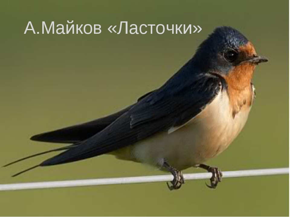 А.Майков «Ласточки»