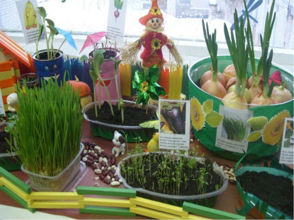 Картинки на тему огород на окне в детском саду