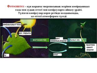 Фотосинтез – күн жарығы энергиясының әсерінен көмірқышқыл газы мен судың отте