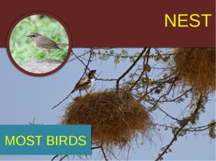 NEST MOST BIRDS