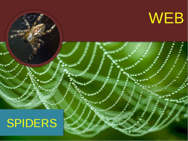 WEB SPIDERS