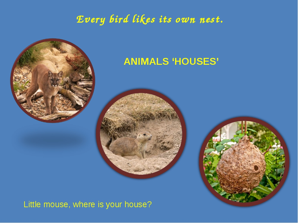 Every bird likes its own nest. ANIMALS 'HOUSES' Little mouse, where is your h...