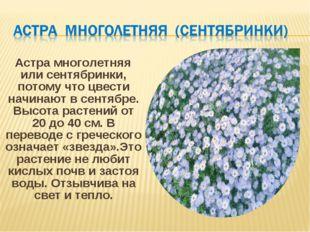 Астра многолетняя или сентябринки, потому что цвести начинают в сентябре. Вы