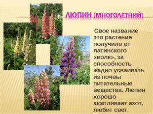 Свое название это растение получило от латинского «волк», за способность жад
