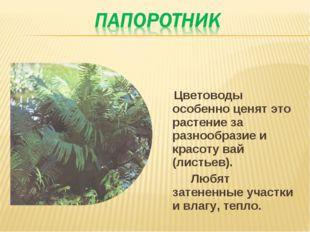 Цветоводы особенно ценят это растение за разнообразие и красоту вай (листьев
