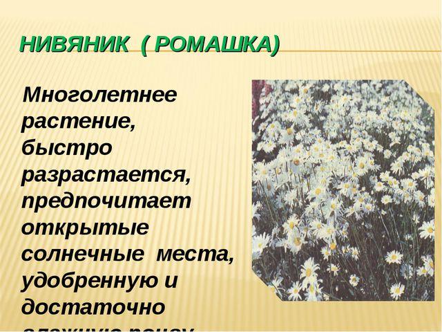 НИВЯНИК ( РОМАШКА) Многолетнее растение, быстро разрастается, предпочитает от...