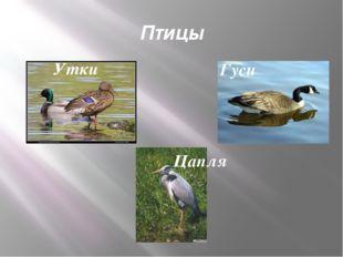 Птицы Цапля Гуси Утки