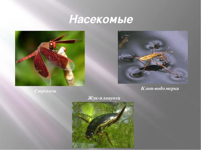 Насекомые Стрекоза Клоп-водомерка Жук-плавунец