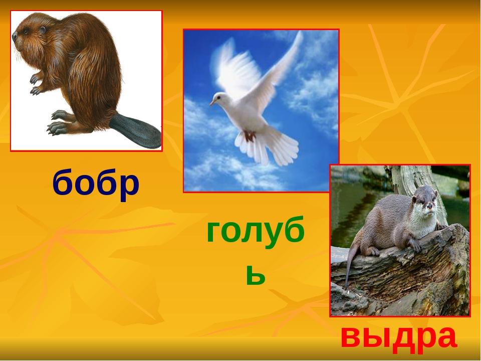 бобр голубь выдра