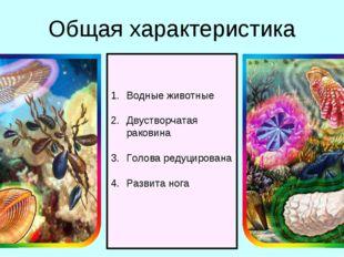 Общая характеристика Водные животные Двустворчатая раковина Голова редуцирова