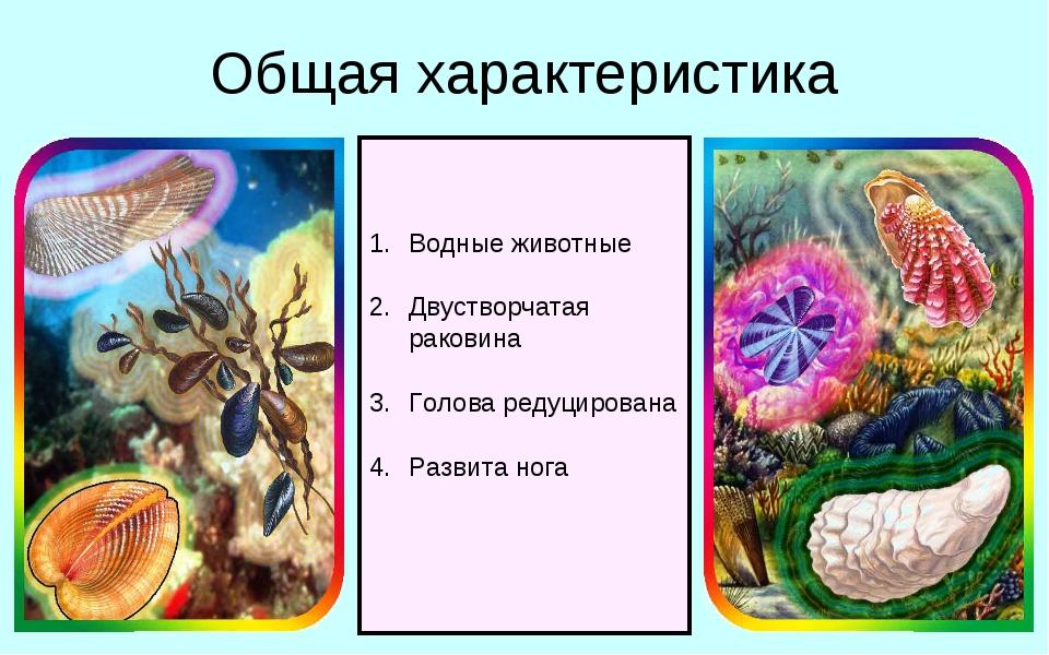 Общая характеристика Водные животные Двустворчатая раковина Голова редуцирова...