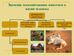 Значение млекопитающих животных в жизни человека