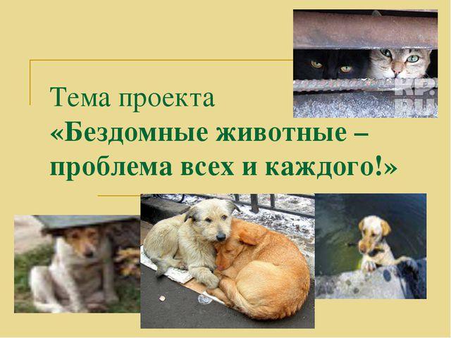 Тема проекта «Бездомные животные – проблема всех и каждого!»