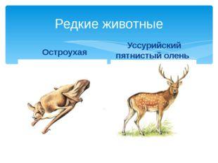 Редкие животные Остроухая ночница Уссурийский пятнистый олень