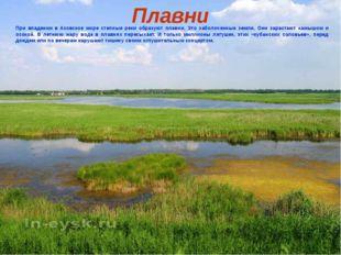 Плавни При впадении в Азовское море степные реки образуют плавни. Это заболоч