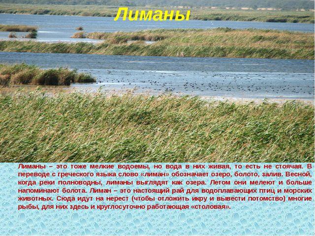 Лиманы Лиманы – это тоже мелкие водоемы, но вода в них живая, то есть не стоя...