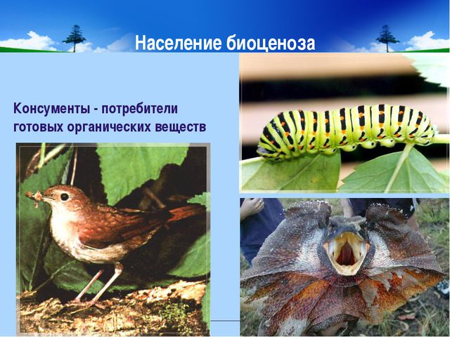 Население биоценоза Консументы - потребители готовых органических веществ МОУ...