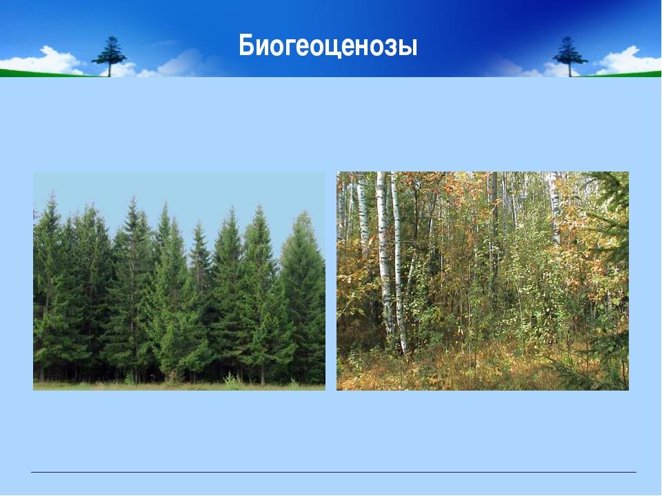 Биогеоценозы