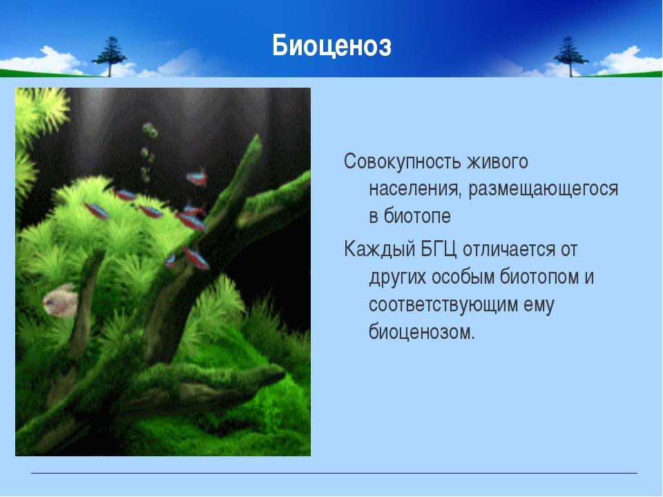 Биоценоз Совокупность живого населения, размещающегося в биотопе Каждый БГЦ о...