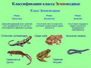 Размер самой маленькой в мирелягушки- филобус равен 8,5 мм, а живет она на