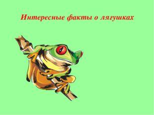 Гигантская лягушка-голиаф является самой большой представительницей своего ви