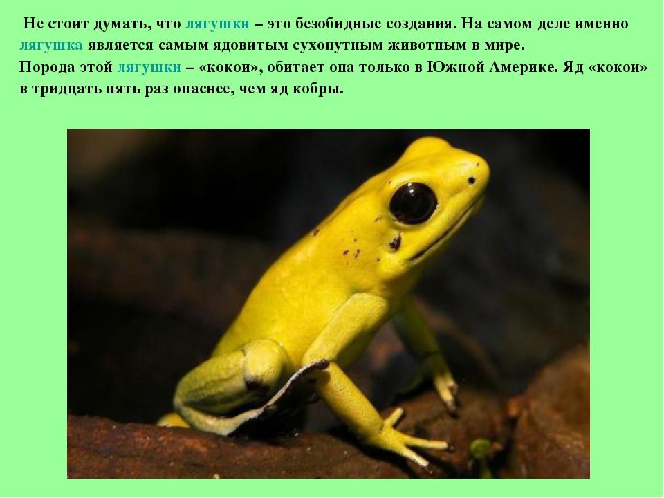 К чему снятся лягушки? Сонник Миллера говорит о лягушках следующее: если земн...