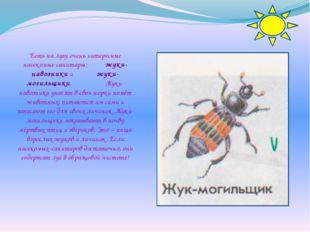 Есть на лугу очень интересные насекомые-санитары: жуки-навозники и жуки-могил
