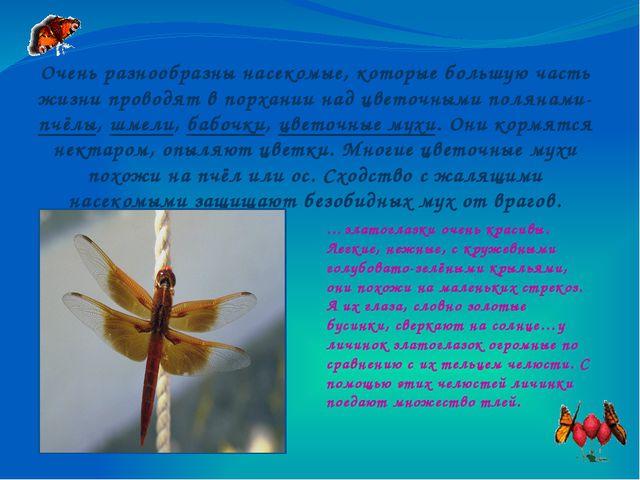 Очень разнообразны насекомые, которые большую часть жизни проводят в порхании...