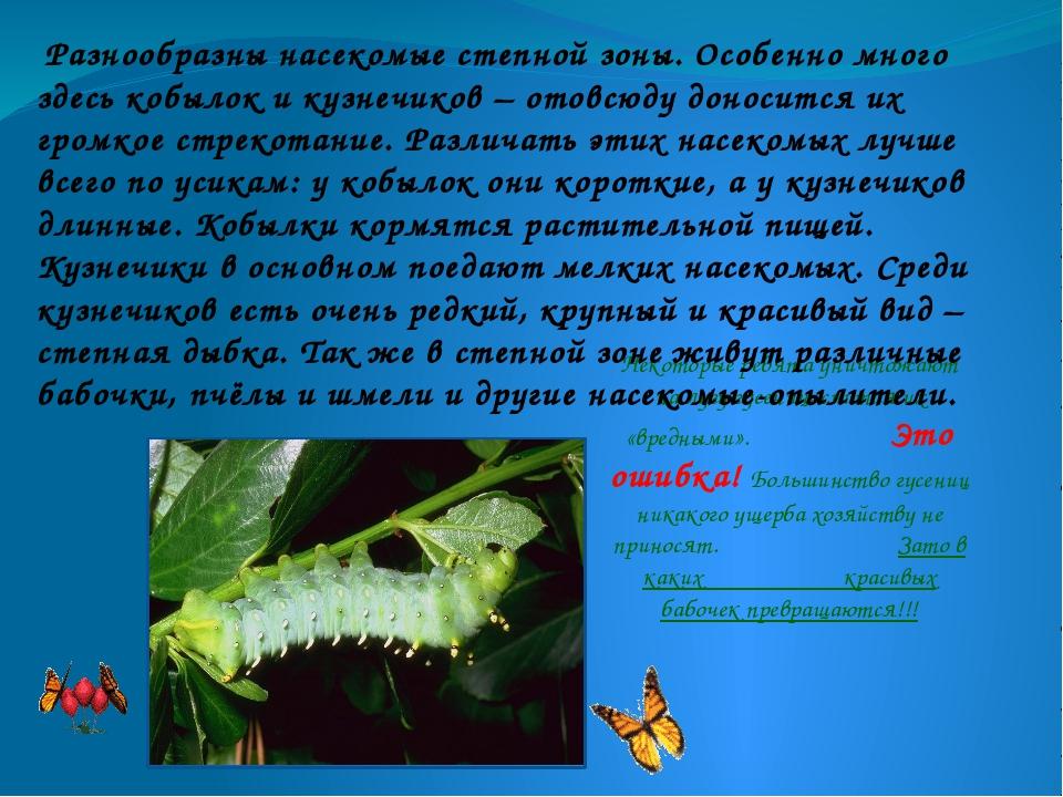 Некоторые ребята уничтожают на лугу гусениц, считая их «вредными». Это ошибка...