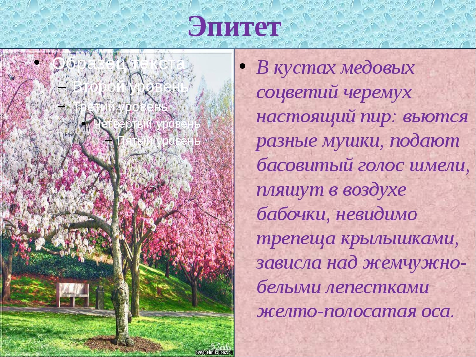 Эпитет В кустах медовых соцветий черемух настоящий пир: вьются разные мушки,...