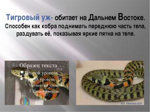 Тигровый уж- обитает на Дальнем Востоке. Способен как кобра поднимать передню