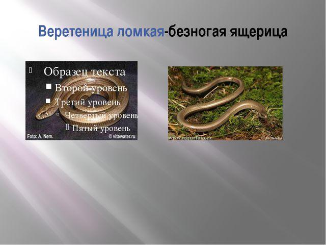 Веретеница ломкая-безногая ящерица